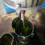 Olio di oliva prodotto dai Volontari di Strada (foto 3)